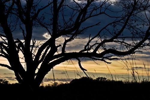 tree-silhouette-hdr_9480