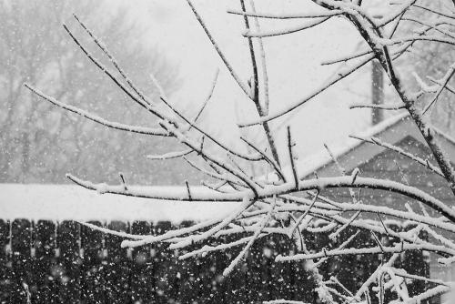Back Yard Snow Branches BW-0346-1000